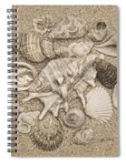 Seashells Collection Drawing Spiral Notebook