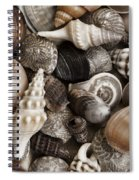 Seashells On The Beach Spiral Notebook