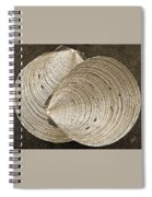 Seashells Spectacular No 11 Spiral Notebook
