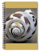 Seashells Spectacular No 2 Spiral Notebook