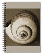 Seashells Spectacular No 25 Spiral Notebook