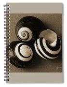 Seashells Spectacular No 27 Spiral Notebook