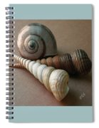 Seashells Spectacular No 29  Spiral Notebook