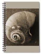 Seashells Spectacular No 31 Spiral Notebook