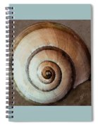 Seashells Spectacular No 34 Spiral Notebook
