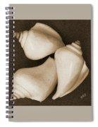 Seashells Spectacular No 4 Spiral Notebook