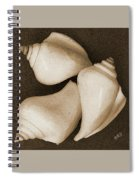 Seashells Spectacular No 4 Spiral Notebook
