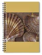 Seashells Spectacular No 7 Spiral Notebook
