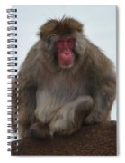 Seated Macaque Snow Monkey Spiral Notebook