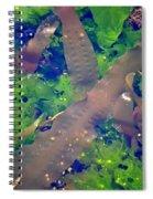 Seaweed Variety Spiral Notebook