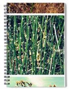 Secret Beach Ll Spiral Notebook