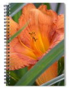 Secret Sunset - Lily Spiral Notebook
