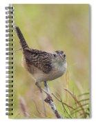 Sedge Wren Spiral Notebook
