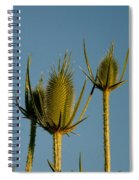 Seed Heads Reach For The Sky Spiral Notebook
