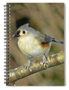 Seed On Tufted Titmouse Spiral Notebook