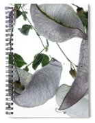 Seed Pods Spiral Notebook