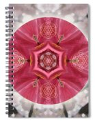 Seeds Of Transformation Spiral Notebook