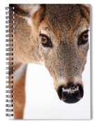 Seeing Into The Eyes Spiral Notebook