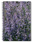 Seeing Lavender Spiral Notebook