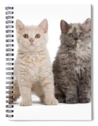 Selkirk Rex Kittens Spiral Notebook
