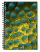 Sem Of Rapeseed Flower Spiral Notebook