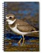 Semipalmated Plover Spiral Notebook