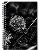 Sensitive Briar Schrankia Nuttalii  Spiral Notebook