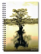 Sepia Cypress Chicot Sp Louisiana Spiral Notebook