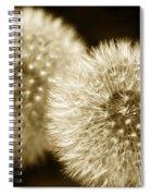Sepia Dandelions Spiral Notebook