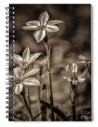 Sepia Dreams Spiral Notebook