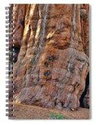Sequoia Tree Base Spiral Notebook
