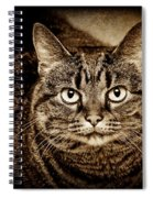 Serious Tabby Cat Spiral Notebook