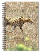 Serval Cat - Kenya Spiral Notebook