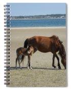 Shackleford Banks Foal Spiral Notebook