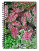 Shades Of Pink And Green And A Hint Of Purple Spiral Notebook