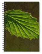 Shadows And Light Of The Leaf Spiral Notebook
