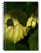 Shadows Of New Life Spiral Notebook