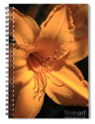 Day Lily Shadows Spiral Notebook