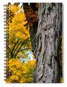 Shagbark Hickory Tree Spiral Notebook