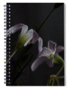 Shamrock Trinity Spiral Notebook