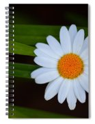 Sharing The Space Spiral Notebook