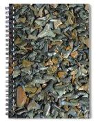 Sharks Teeth 1 Spiral Notebook