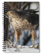 Sharp-shinned Hawk And Feather Spiral Notebook