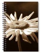 Shasta Daisy Flower Sepia Spiral Notebook