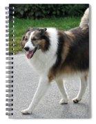 Sheba Spiral Notebook