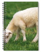 Sheep Spiral Notebook