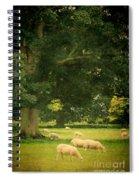 Sheep Grazing Spiral Notebook