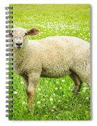 Sheep In Summer Meadow Spiral Notebook