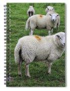 Sheep On Parade Spiral Notebook