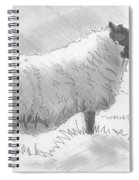 Sheep Sketch Spiral Notebook